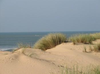Sur le littoral, les forestiers se mobilisent pour protéger les dunes