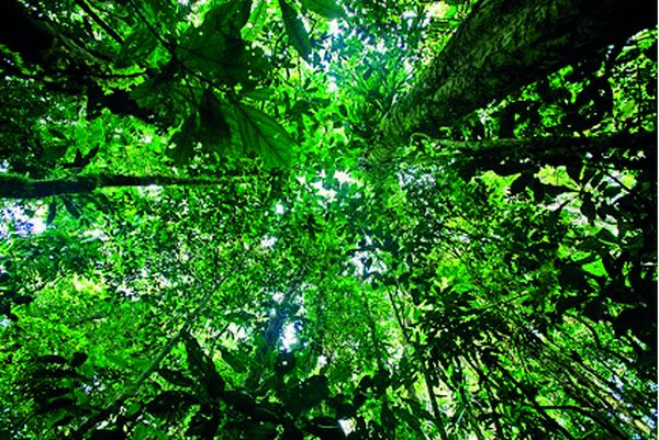 Le parc national Yasuni, dans l'Amazonie équatorienne, est probablement le biote hébergeant la plus grande densité de biodiversité de la planète.